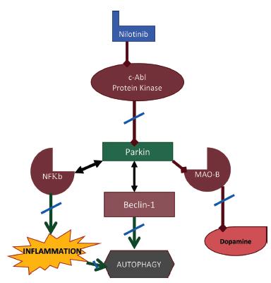 Figure 2. The role of parkin in pathogenesis of Parkinson's disease.