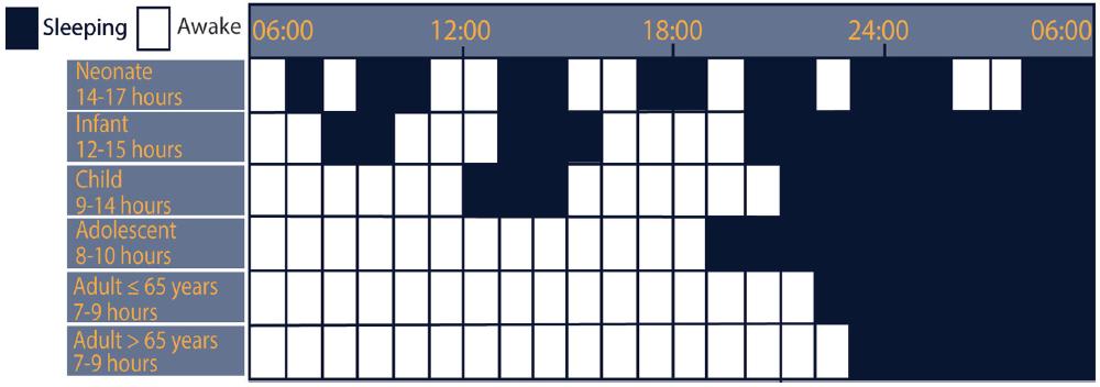 Figure 1. Developmental Ontogeny of Sleep. Developmental sleep needs by hour and distribution across 24 hours, based on age.
