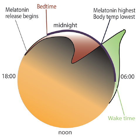 Figure. Properly timed bright, dim light, and melatonin can advance or delay a person's circadian rhythm. Light exposure in the green zone advances and locks in the sleep cycle. Light exposure in the red zone can disrupt the circadian system by suppressing melatonin and pushing the internal clock later.