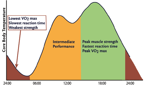 Figure 2. Variations in physical performance during a 24-hour period closely mirror fluctuations in core body temperature, including changes in aerobic output (VO<sub>2max</sub>), anaerobic output (muscle strength), and reaction time.