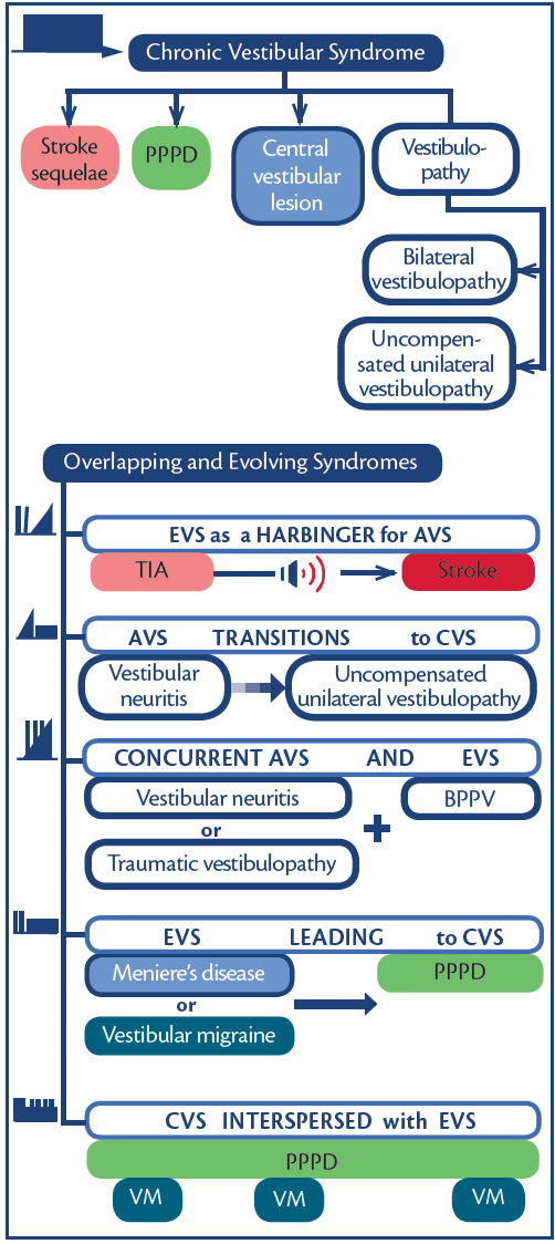 Figure 4. Chronic vestibular syndromes and overlapping/evolving syndromes. Abbreviations: AVS, acute vestibular syndrome; BPPV, benign paroxysmal positional vertigo, CVS, chronic vestibular syndrome; EVS, episodic vestibular syndrome; PPPD, persistent postural perceptual dizziness; TIA, transient ischemic attack; VM, vestibular migraine.
